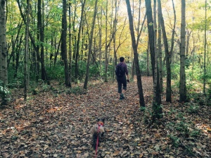 A walk through the woods in Summit Lake State Park