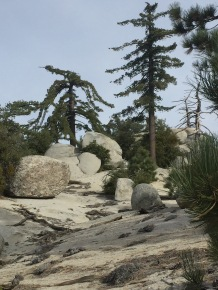 cool trees and rocks