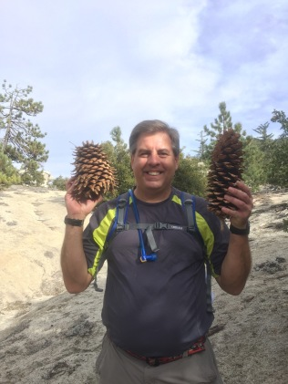 2 different pine cones- both are gigantic